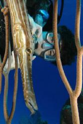Diver and trumpetfish.  Nikon D70, 12-24 wide angle.   by David Heidemann