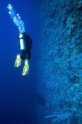 Diving @ Elphinstone by Nicholas Samaras