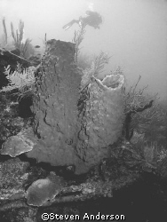 This photo was taken while diving in Roatan. Here is an e... by Steven Anderson