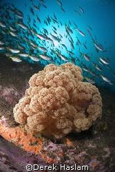 Soft coral. Magic point. Sydney. D200, 10.5mm. by Derek Haslam