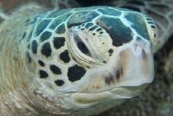 turtle - sipadan by Stewart Smith