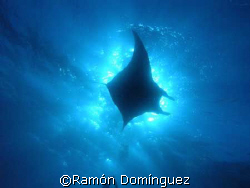 giant manta silhouette by Ramón Domínguez