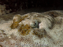 Yellow Stingray Eye by Terence Zahner