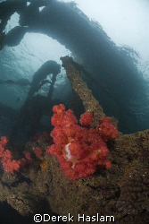 Snorkelling the wrecks of Tangalooma. Moreton island. D20... by Derek Haslam