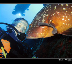 Up close and personal!.........Canon G7 maximum 35mm sett... by Brian Mayes