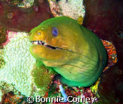 Moray eel seen in Tobago June 2007.  Photo taken with a C... by Bonnie Conley