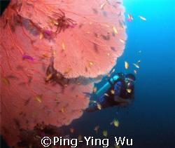 Big fan&Diver Bohol philipines January 2007 by Ping-Ying Wu