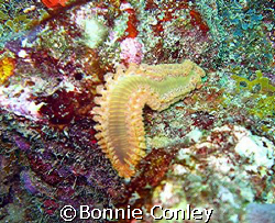 Seen in Tobago June 2007.  Taken with a Canon PowerShot S... by Bonnie Conley