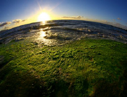 """SeaWeed World"". Low tide showing some beautiful green se... by Mathew Cook"