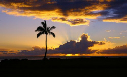 """Palm at Kaika Bay"". Taken in Oahu, Hawaii. Thanks. by Mathew Cook"