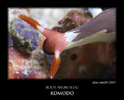 root neon slug komodo by Stewart Smith