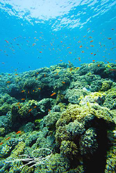 Reefscape from Red Sea by Nicholas Samaras