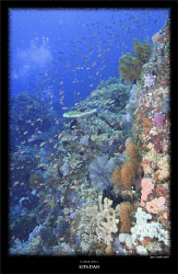 one of the beautiful coral encrusted walls of sipadan by Stewart Smith