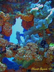 Coral covered stern of the WIT Shoal II. by Ricardo Guzman