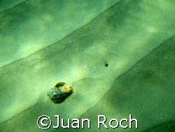only fantasy by Juan Roch