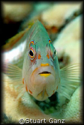 Hawk fish eyeing me. I took this with a Canon 20D - 60MM ... by Stuart Ganz