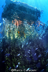 Open sea stock farm of mussel- Nikon D100 and 16mm by Marco Caraceni