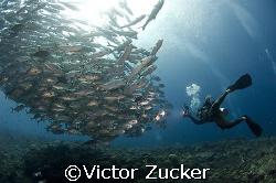 marys island solomons by Victor Zucker