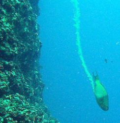 Parrotfish going, going, gone - NMI by M E Dalsaso