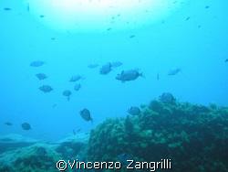 Sardinia, Cala di Squalo by Vincenzo Zangrilli