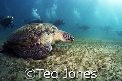 Turtle and Divers by Ted Jones
