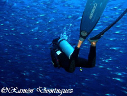 Diver been amazed by a school of skipjack tuna, Euthynnus... by Ramón Domínguez