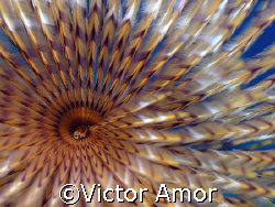 Whirlpool by Victor Amor