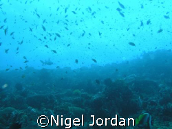 Bali Shark Banquet by Nigel Jordan