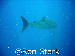 See Spot Swim