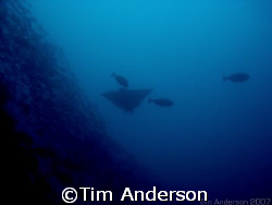 picture taken at a dive site called Gotham City in Moreto... by Tim Anderson