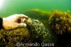 Harbour Seal making a new friend by Armando Gasse
