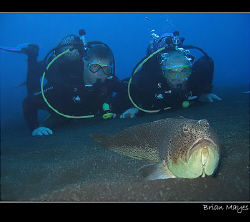 Starry Weever with two big Spanish Frogfish ;-) .......Ca... by Brian Mayes
