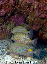three dive buddies at the Similans by Mona Dienhart