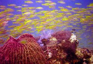 Schools of fish on Reef. No strobe. Used Caplio Ricoh cam... by Blair Hughes