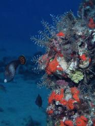 Deep reef.  Kaanapali Beach, Maui HI by David Espinoza