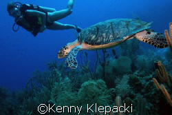 East Chute - Cayman Brac - Depth of 60ft, water temp 85, ... by Kenny Klepacki