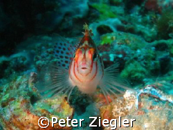 """lovely small barsh says """"Hallo"""" by Peter Ziegler"""