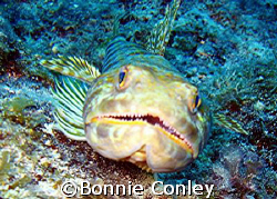 Face to face with a lizardfish.  Photo taken August 2007 ... by Bonnie Conley