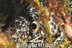 Moray eel, Cancun México by Hilario Itriago