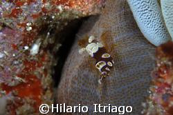 Cave Diver by Hilario Itriago