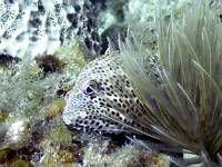 Rock Hind. No strobe. Used Caplio Ricoh camera with sea a... by Blair Hughes