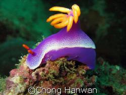 taken in tenggol island. by Chong Hanwan