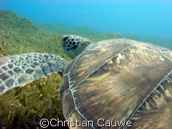 green turtle, dahab, lighthouse by Christian Cauwe