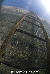 Ladder. Trefor pier. D200, 10.5mm. by Derek Haslam