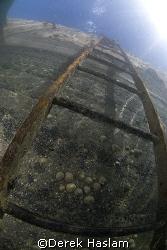 Ladder. Trefor pier. D200, 10.5mm. by Derek Haslam