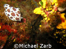 Don't really know what it is...some sort of sea anemone .... by Michael Zarb
