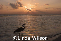 Is my knee supposed to bend this way??? by Linda Wilson