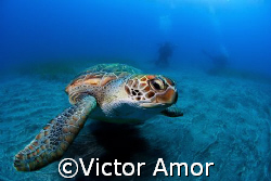 Green turtle by Victor Amor