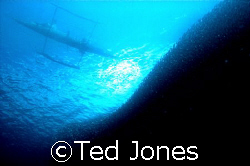 A wall of sardines under a small fishing boat by Ted Jones