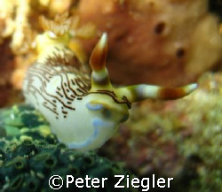 Hallo - you see me also ?
